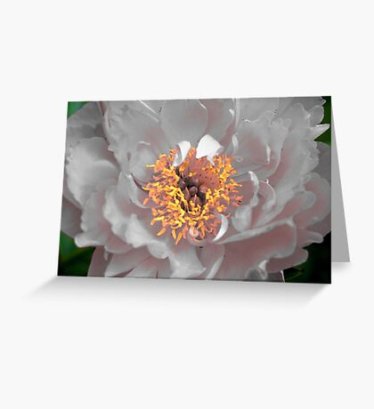 Unique Peony Greeting Card