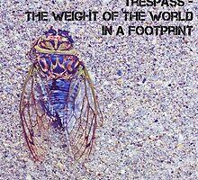 cicada by gatheringwonder