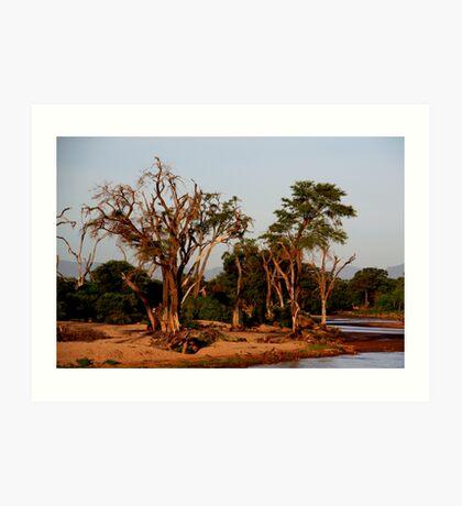 Out of Africa - Samburu Art Print