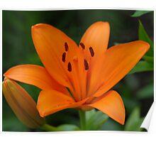 Orange Beauty III Poster