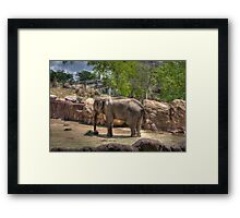 Painted Elephant Eating Framed Print