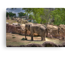 Painted Elephant Eating Canvas Print