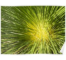 Tree Grass Poster