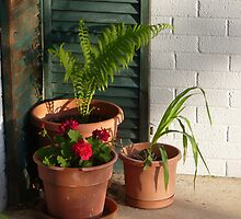 """""""Three Potted Plants"""" by dfrahm"""