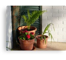 """Three Potted Plants"" Canvas Print"