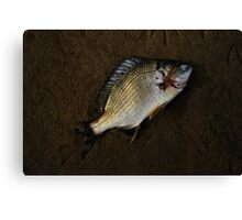 Plenty More Fish in the Sea Canvas Print
