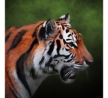 A Leader - Siberian Tiger Art Photographic Print