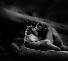 Juliet and Romeo in Singapore Zoo by Wey Hun Tan