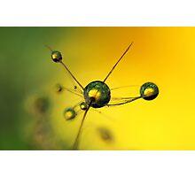 Yellow Star Photographic Print