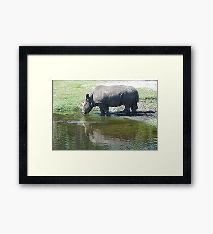 Unicorns Framed Print