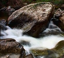 Flea Creek by Raquel O'Neill