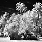 The Garden - Fiji by Hans Kawitzki