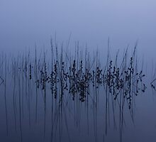 Reeds, Blowering Dam, Snowy Mountains, NSW by Josh Boyd