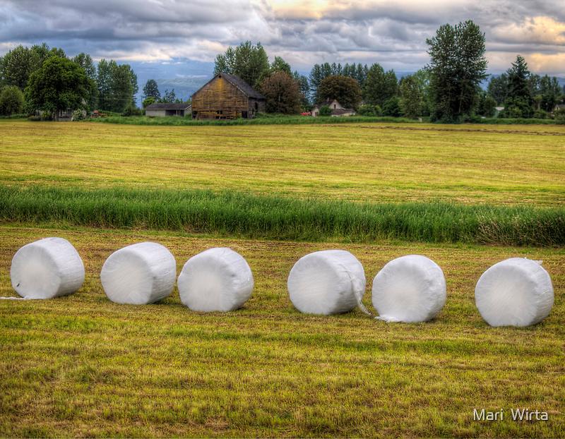 Marshmallows in the Field by Mari  Wirta