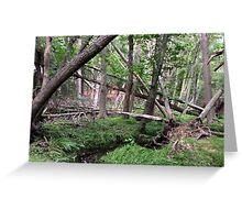Naturescape 4 Greeting Card