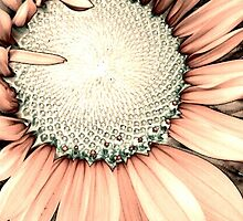 Pink Sunflower by Catherine  Howell