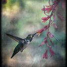 Anna&#x27;a Hummingbird  by Saija  Lehtonen