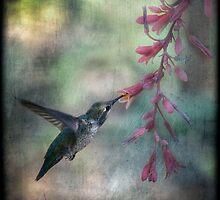 Anna'a Hummingbird  by Saija  Lehtonen