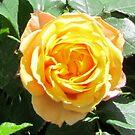 baroque rose I by Faith Puleston
