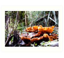 orange shrooms in the park Art Print
