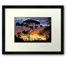 Sunset, RIP, Eucalyptus, Australia. Framed Print