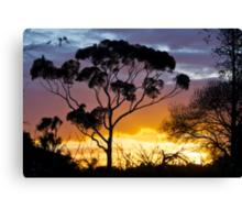 Sunset, RIP, Eucalyptus, Australia. Canvas Print