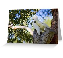Sulfur-Crested Cockatoos - Sydney - Australia Greeting Card
