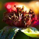 Rose and Shine  by Carol Ferbrache