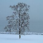 The lonely tree and snow by Frank Olsen