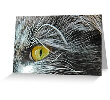 Through the cat's eye Greeting Card