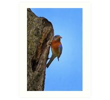 Male Eastern Bluebird With Insect Art Print
