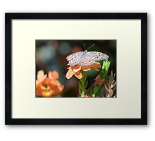 Beige colored butterfly with tropical flowers Framed Print