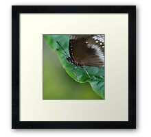 Black and Grey Blue Butterfly Framed Print