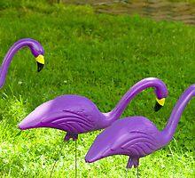 Three flamingos by Thad Zajdowicz