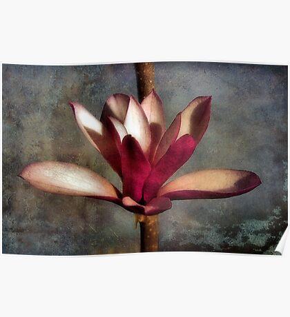 Japanese Tulip Magnolia Poster
