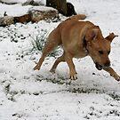 Adrienne in the Snow by DebbieCHayes