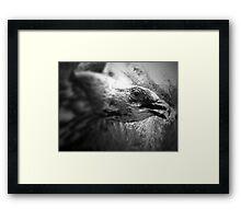 Gothic Hawk Framed Print