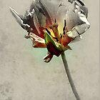 Textured Tulip by Laurel  Coleman