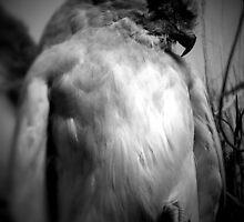 Gothic Hawk 3 by Jason Feather