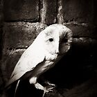 Barn owl by Jason Feather