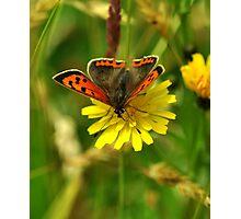 Small Copper Photographic Print