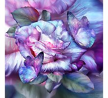 Purple Rose And Butterflies Photographic Print
