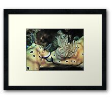 Nudibranch train....Cute Risbecia Framed Print