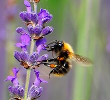 Buzy Bee by Hetty Mellink