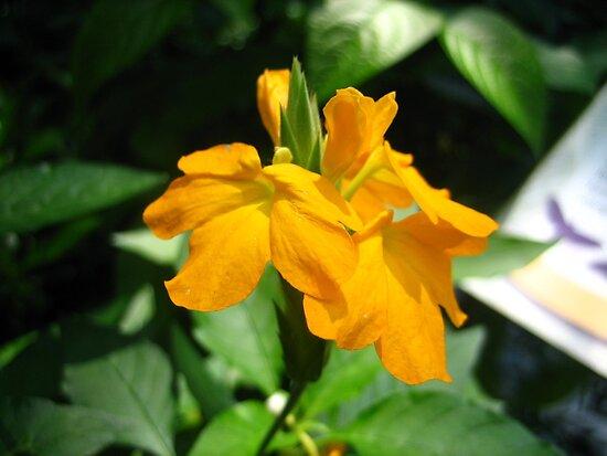 The Summer Of Orange by musicaldreamer