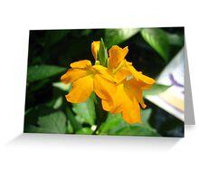 The Summer Of Orange Greeting Card