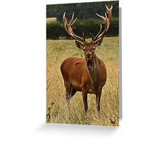 Impressive Antlers Aren't They? Greeting Card