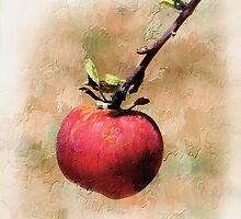 One Red Apple by CarolM