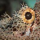 Scorpionfish eye, Lembeh by shellfish