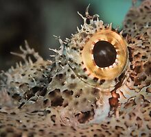Scorpionfish eye, Lembeh by shellfish